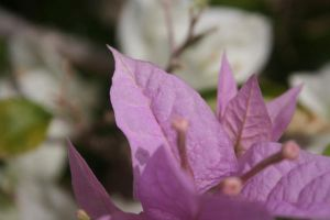 Purple Flower by Amy-Lou-Photography