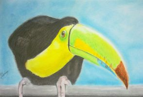 Toucan A4 by VisualArt93