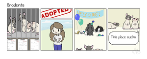 Brodents: Adoption by MNGengar