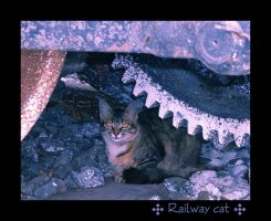 railway cat by hyky