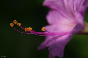 Purple7.. by teresa-lynn