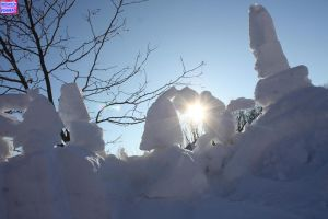 My front garden Feb 26 2014 by KeswickPinhead