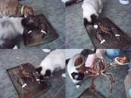 Cats V.S. Springtrap the Lobster by Koili