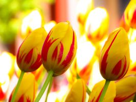 Yellow Tulips by VividThorn