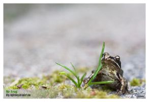 Mr Frog 02 by NightSheep