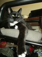 Cat takes the chair by StevenEly