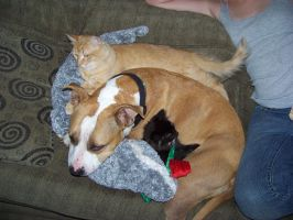 My Pitbull and Her Cats by Marshwiggle777