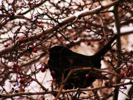 bird in a tree III by rockmylife