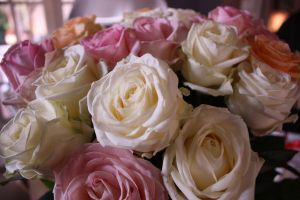 birthday roses two by MochaCat