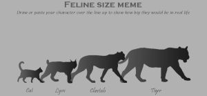 Feline Size Meme by merrypaws
