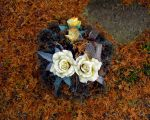 Autumn roses by violet-funeralflower