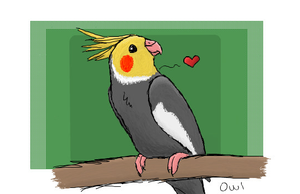 Cockatiel by MizfitOwl