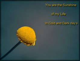 You are my Sunshine by FrankAndCarySTOCK