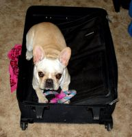Chicago Packing Is Difficult by Destiny-Carter