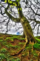 Just a tree by AlanSmithers