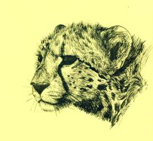 Cheetah sketch by Kivuli
