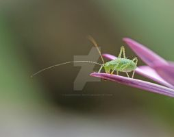 nymph with x-ray eyes... by clochartist-photo