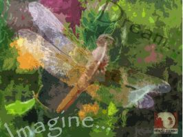 dragonfly dream by shellrose