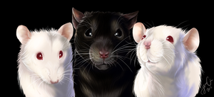 Rat commish by Cederin