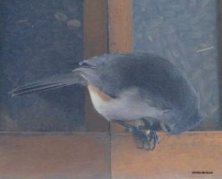 Tufted Titmouse Jan  6 2010 by seto2112