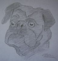 Pug Drawing by Rand0mD00dles
