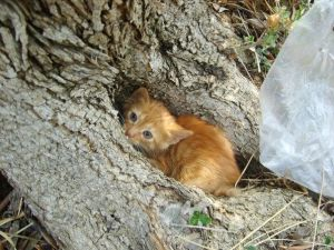 cat in the tree hole by mecengineer