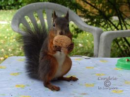 Squirrel 114 by Cundrie-la-Surziere