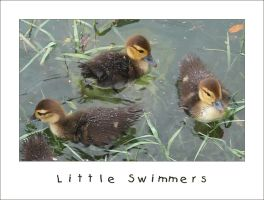 Little Swimmers by xseption