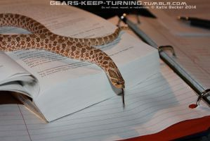 Snake Studies by Dachindae