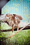 Buzzard in the Yalta Zoo by AndroMor