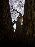 Peeping tree by w3nt4n
