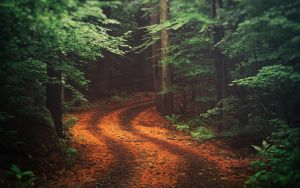 Green Forest Road by Binary-Map
