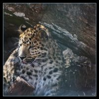Leopard 6 by Globaludodesign