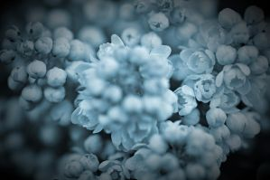 Blue dream by tomsumartin