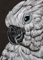 Umbrella Cockatoo ACEO by The-GoblinQueen