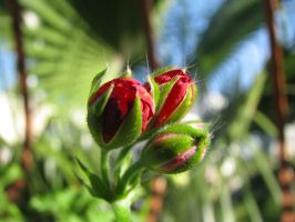 Buds gradually by silence-scenery