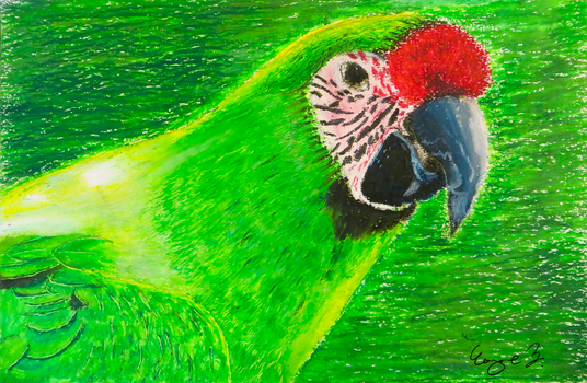 Green Macaw by Driftglide