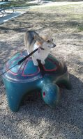 Sweetie on a Turtle by IsisAnkh
