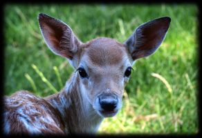 Me fallow deer Me Bambi by pagan-live-style