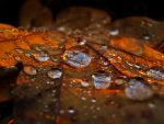 Autumn Pearls by Photopathica