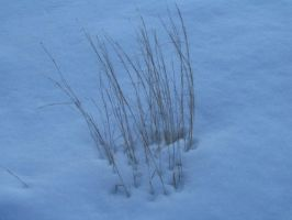 peony-stock: lonely grass 1-3 by peony-stock