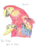 Red Parrot by Tarantulakid96