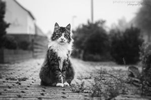 King of the street by FeliDae84