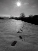 Tracks through the snow by NiVosta
