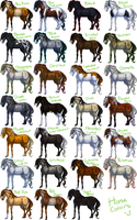 Lots and lots of horsehs by pipamir