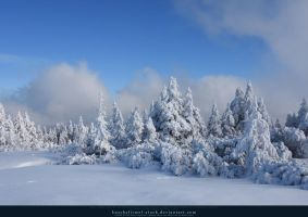 White Forest 07 by kuschelirmel-stock