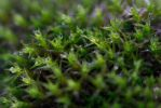 Moss1 by vodoc