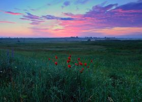 Landscape with poppies by lica20
