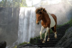 Paint Horse Manip - First Manip by TheCampolina