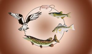 The Food Chain by katxicon